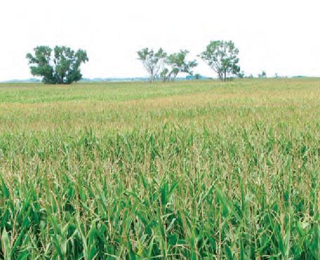 Farmland Near Carthage