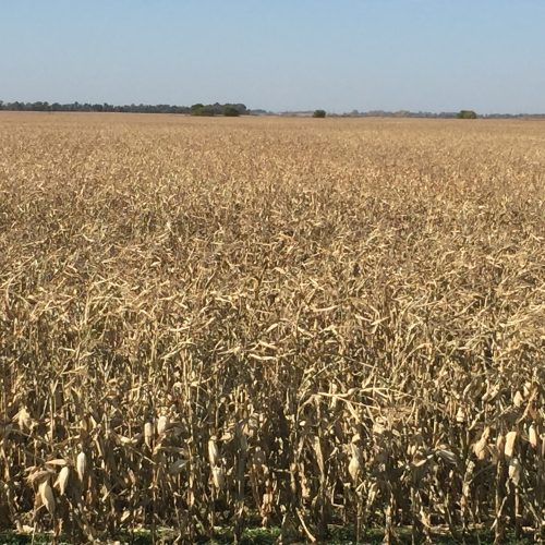 Turner County, South Dakota land