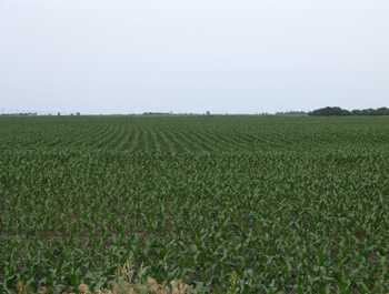 South Dakota Farmland for Sale